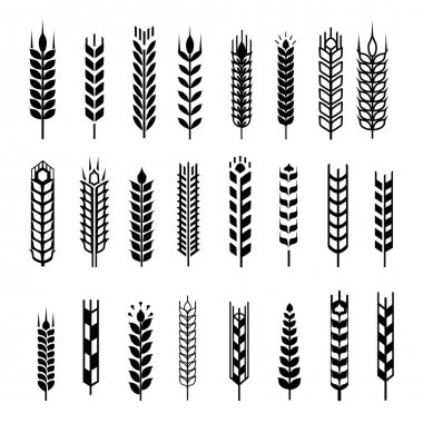 Wheat ear icon set, graphic design elements, black isolated on white background, vector illustration.