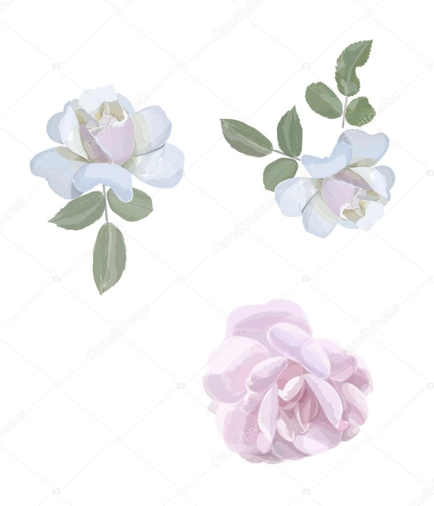 Watercolor roses elements,  Vintage leaves, flowers herbs, Vector hand drawn design illustration