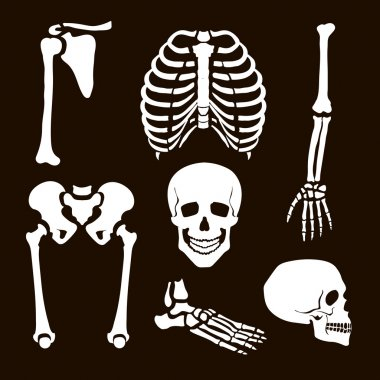 Collection Human Skeleton