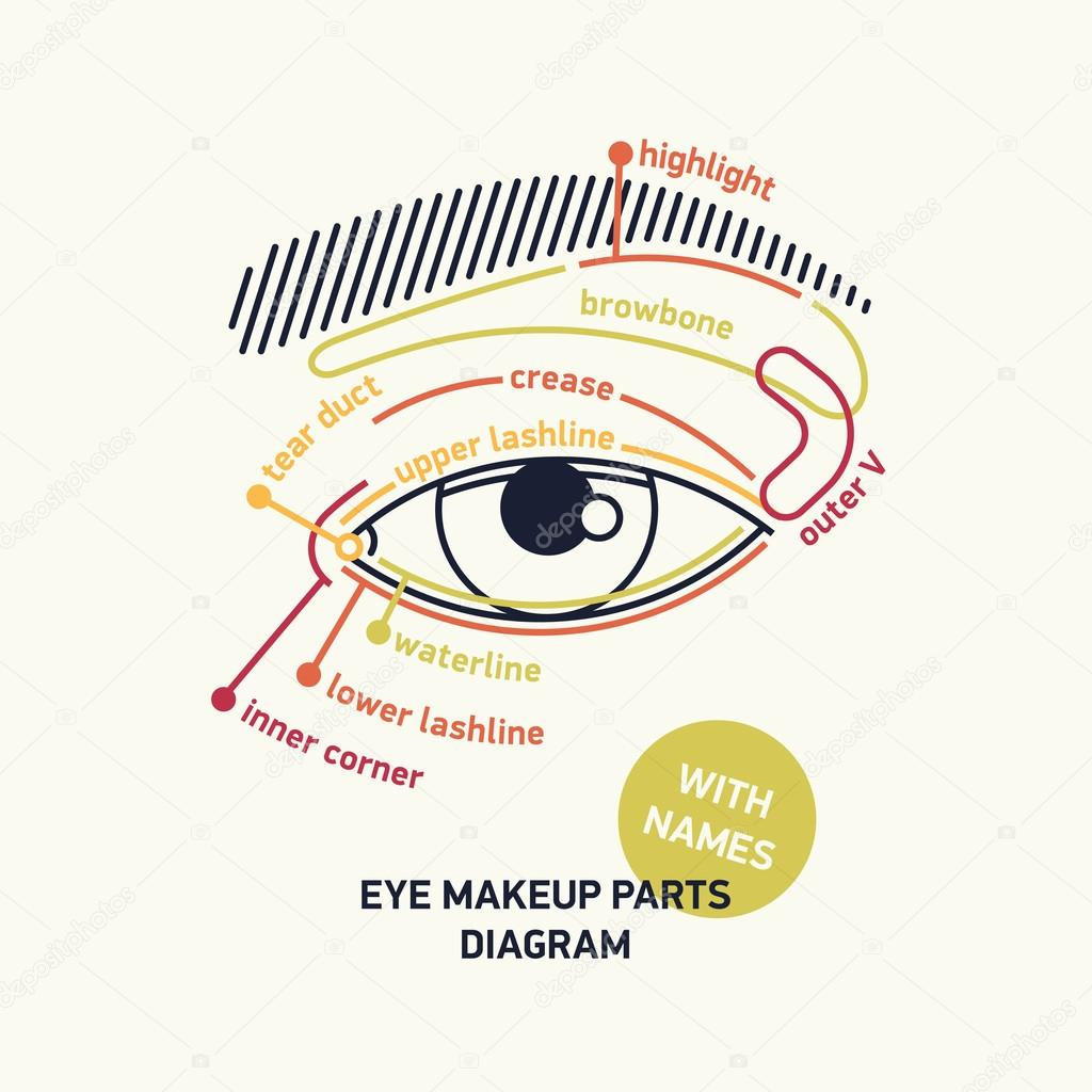 Diagram for eye makeup with names stock vector mashatace clean stylish linear vector eye parts diagram for makeup with names ideal for fashion beauty makeup web and graphic design tutorials and publications ccuart Gallery