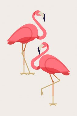 Cool Lovely flamingos