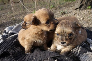 Small dogs, close-up view