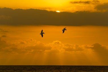 Freedom Ocean Sunset Sun Rays Birds of Peace