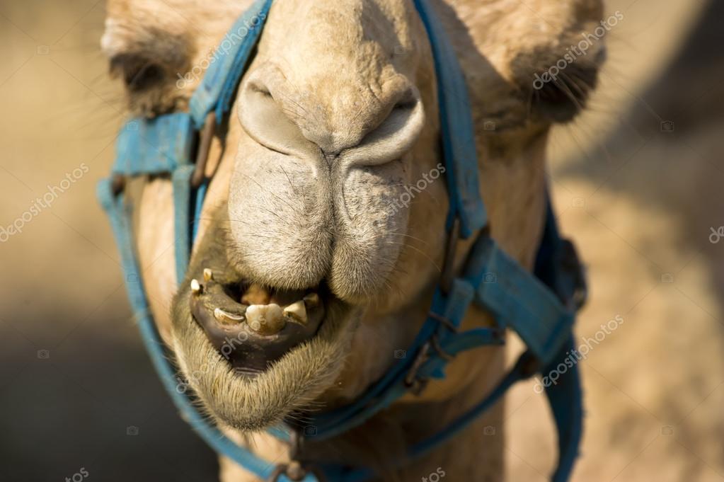 стрижке картинка с лицом человека из животных где верблюд ставим