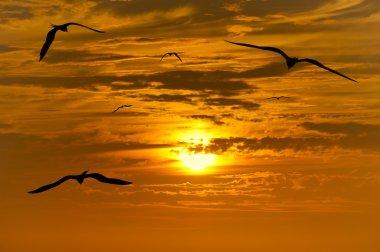 Birds Flying Silhouette