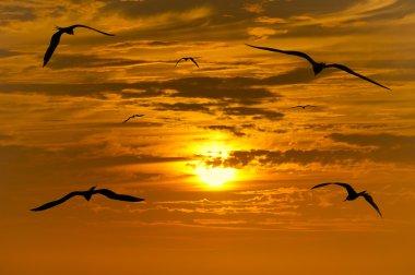 Bird Silhouette Flying