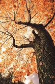 fa őszi táj