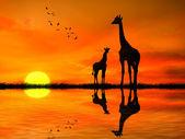 Fotografie siluety dvou žirafy proti africké slunce