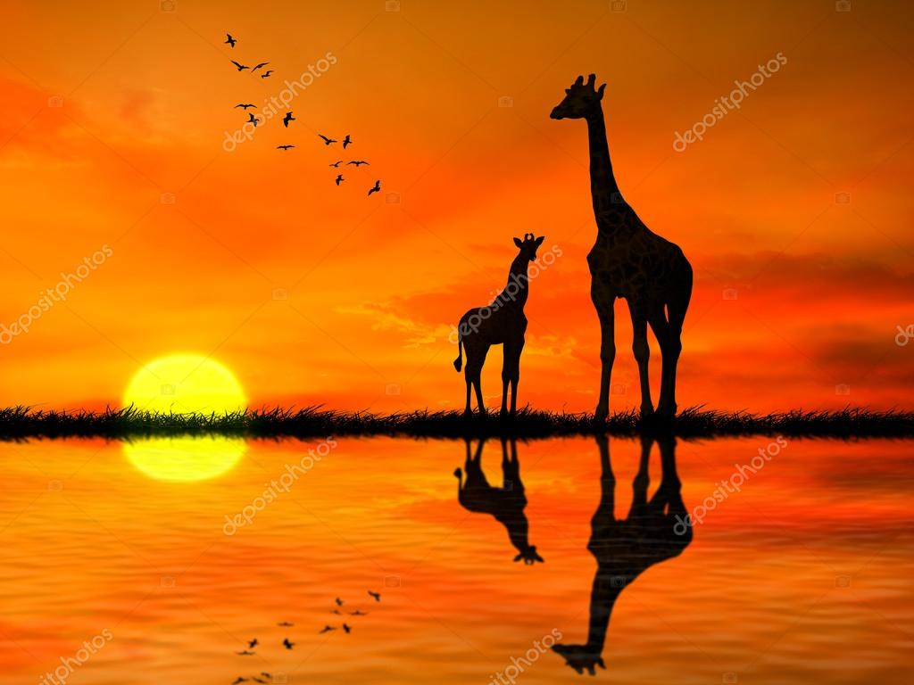 Silhouettes of two giraffes against African sunset
