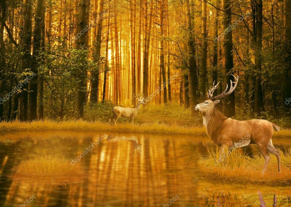 Deer Bucks in summer sunset light standing in an opening in woods