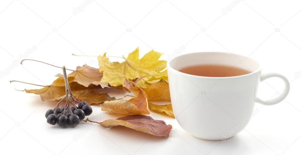 White mug of tea on a white background with autumn leaves and black rowan berry
