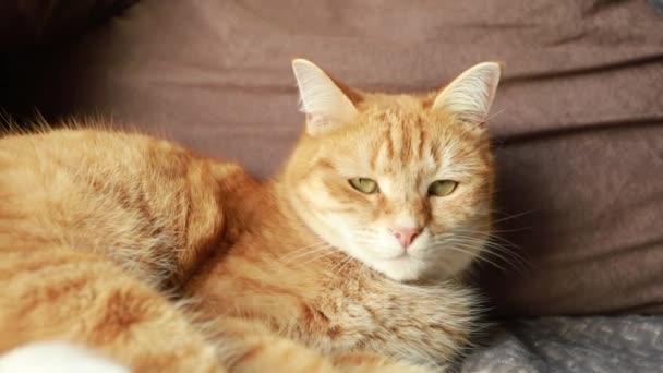 vörös macska az ágyon