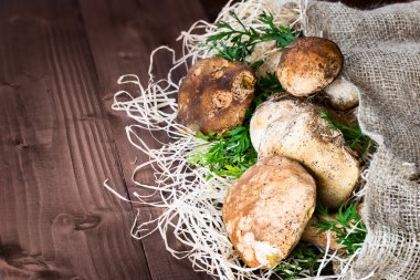 Porcini mushrooms still life