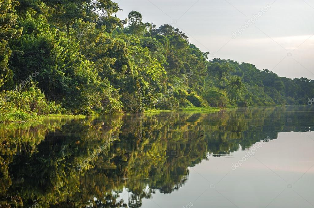 River in the Amazon Rainforest, Peru, South America
