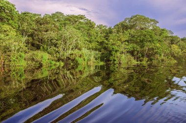 River in the Amazon Rainforest, Peru, South America