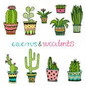 Cactuse a sukulentní ručně tažené sada