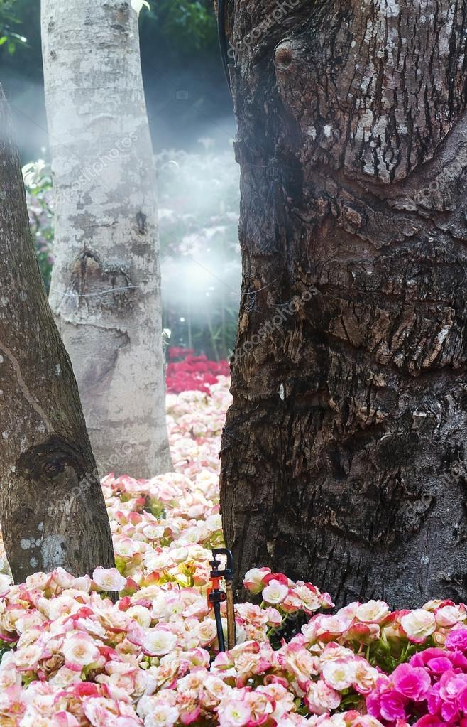 Baum Und Garten baum und garten stockfoto coolhand1180 103099804