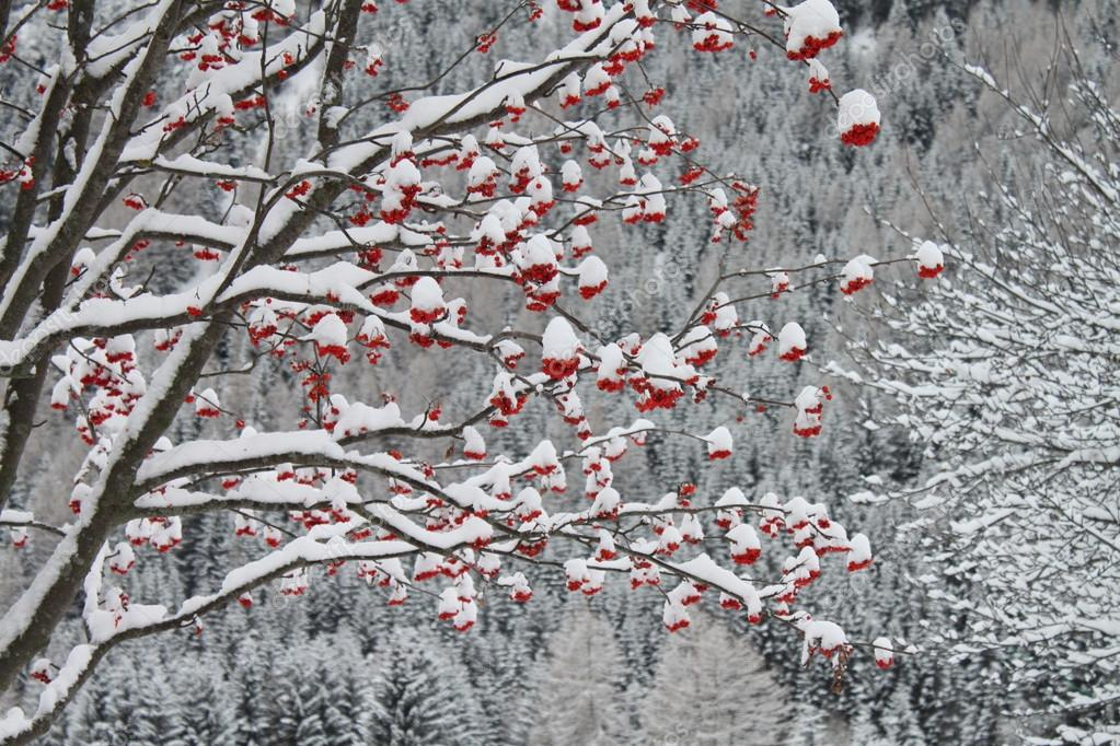 Winter landscape with red berries