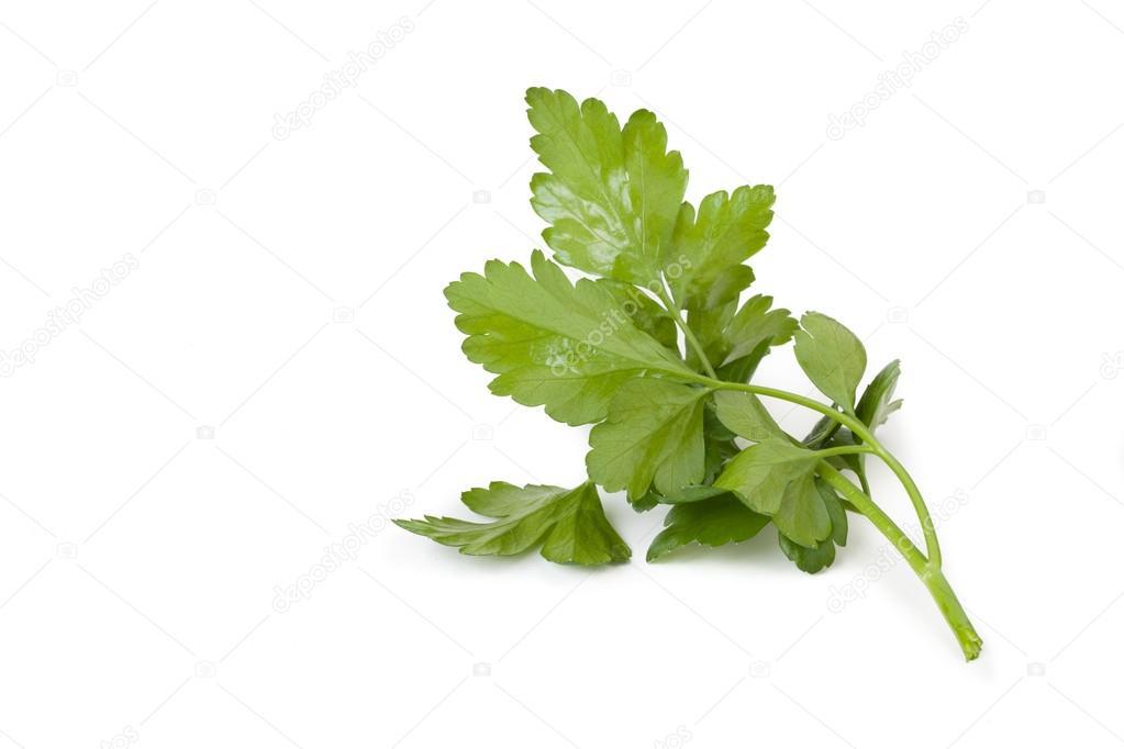 sprig of fresh parsley isolated on white background