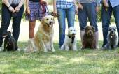 Photo Group Of Dogs With Owners At Obedience Class