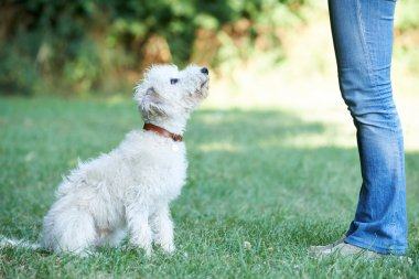 Dog Owner Teaching Pet Lurcher To Sit