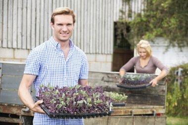 Couple Planting Seedlings On Organic Farm