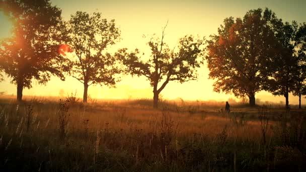 Chůze psa do ranní mlhy