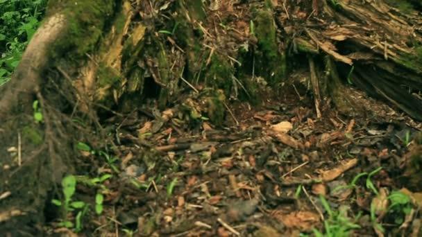 Zkažený strom