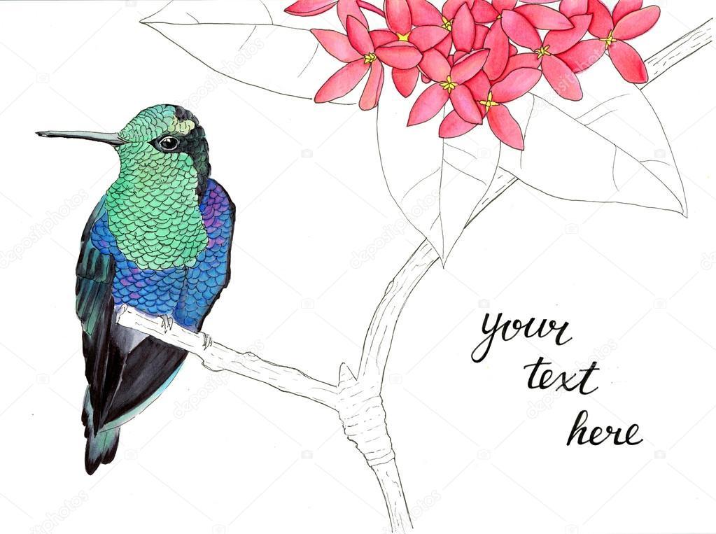 Colibrí. Ilustración acuarela — Foto de stock © runLenarun #116630744