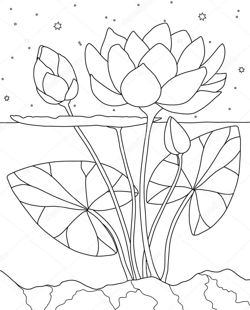Lotus Su Boyama Kitabı Sayfası Stok Vektör Runlenarun 118623556