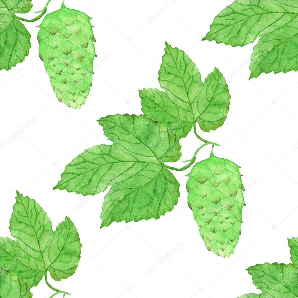 Watercolor seamless pattern with hops on the white background, aquarelle. Vector illustration.