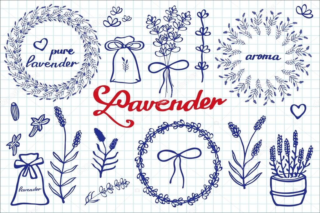Lavender set. Hand-drawn cartoon lavandula collection - flowers, calligraphy, floral elements. Doodle drawing.