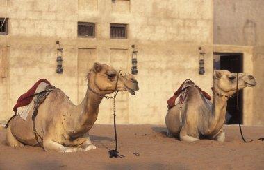 ARABIA EMIRATES DUBAI
