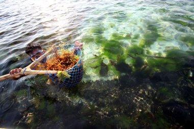 people at work on a seaweed plantation