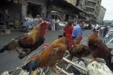 cocks at marketstreet in Damaskus