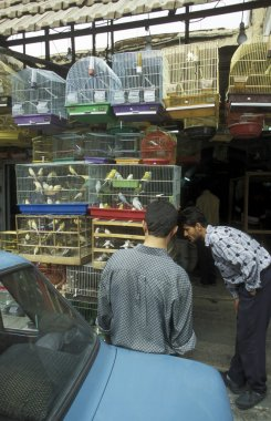 men standing near car at poultry market