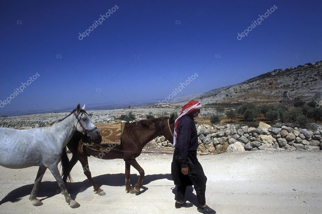 Arab farmer with horses