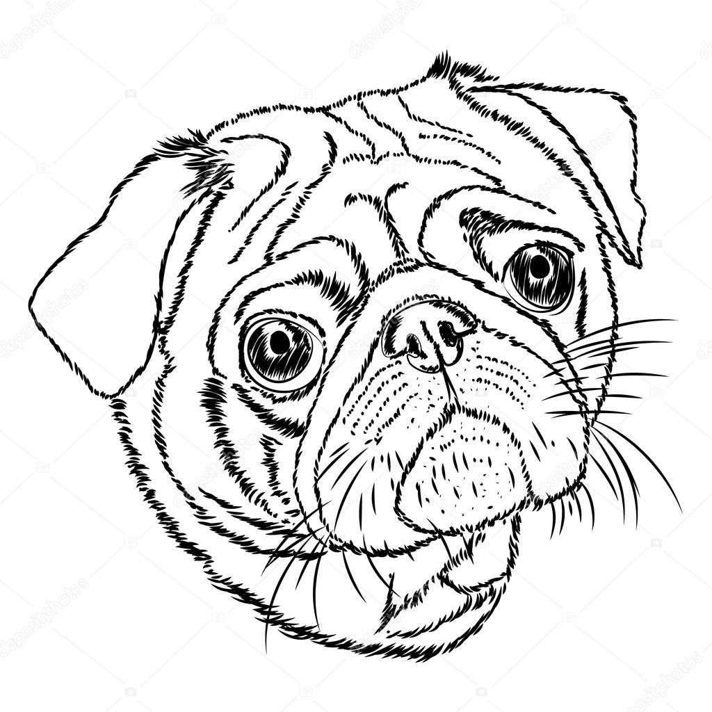 Pug vector ilustración linear — Archivo Imágenes Vectoriales ...