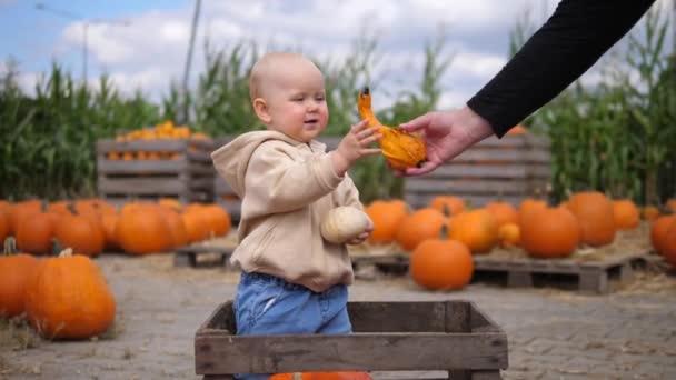 Dospělá ruka dává dýně roztomilé dítě na sobě nahé mikiny stojící v dřevěné krabici v dýňové náplasti