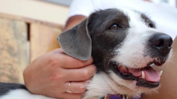 Fang von Cute Puppy Dog hautnah
