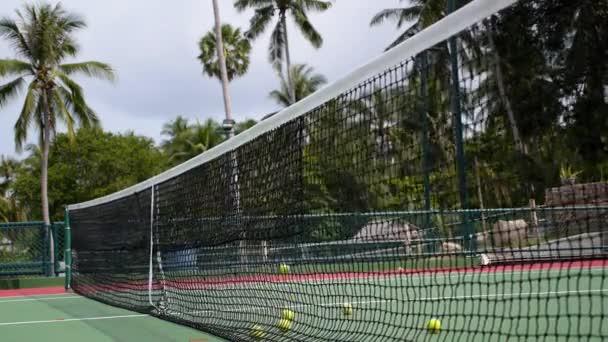 Tenisové míčky v soudní síť s Palm stromy pozadím