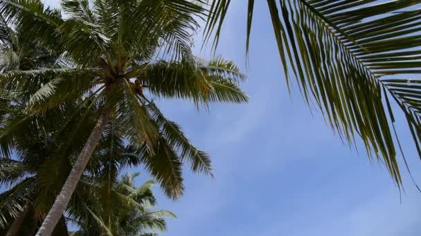 Kokosové palmy v modré slunečné nebe