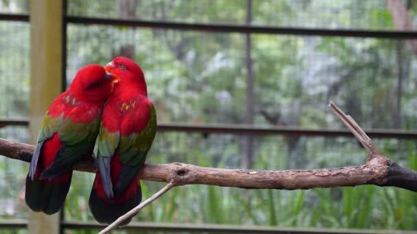 Pár papoušků na větvi v lásce