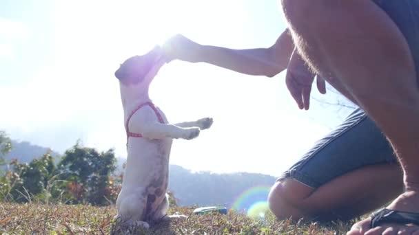 Jack Russel Terrier spielt im Freien mit seinem Besitzer. Zeitlupe.