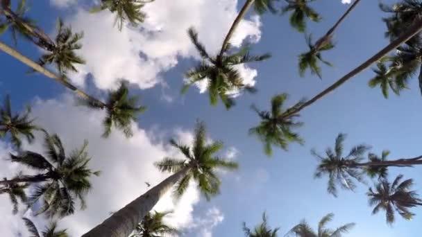 Tropical Island Paradise s palmami a modrá obloha. Časová prodleva