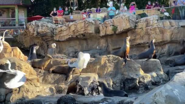 Orlando, FL USA - November 23, 2020 - Sea Lions and birds begging for fish from visitors at a zoo.