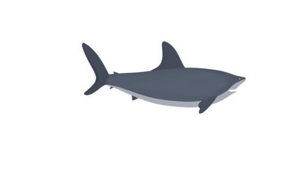 Hai. Haifisch, animierter Cartoon