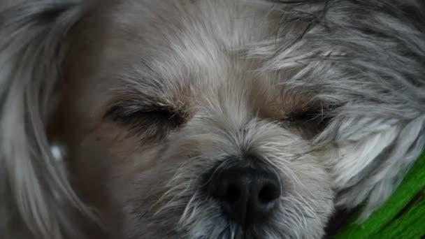 Pes tak sladký spánek