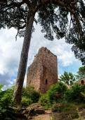 Photo Old medieval fortress ruins of Chateau Landsberg in deep forest