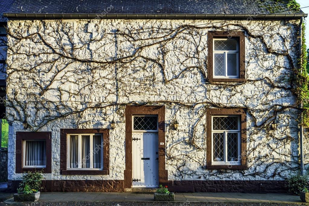 Natuurlijke decoratie van huis muur grammomys van planten